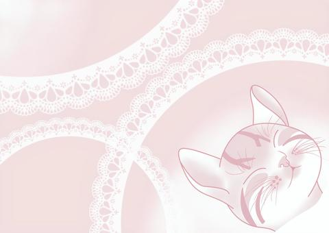 Kitten nap pink and white lace