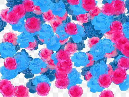 Blue rose Red rose