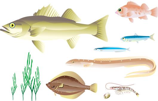 Sea fish-2