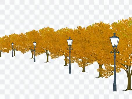 Street tree (and wood road)