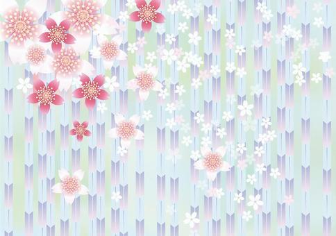 Sakura的花和Yabu 16