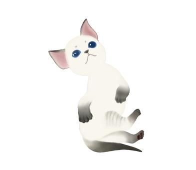 快樂的暹羅貓