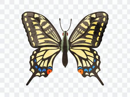 Animal_insect_swallowtail butterfly_watercolor