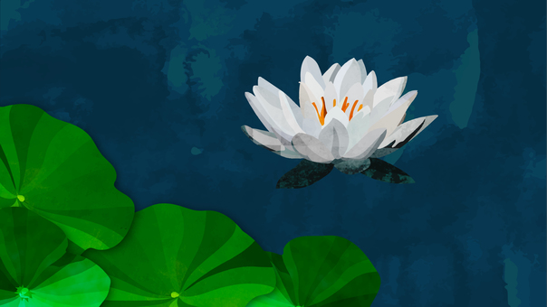 Background material: water lily, white (full HD size)