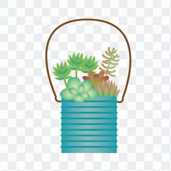 Houseplant - Planting of foliage plants (can)