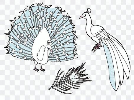 White Peacock Set