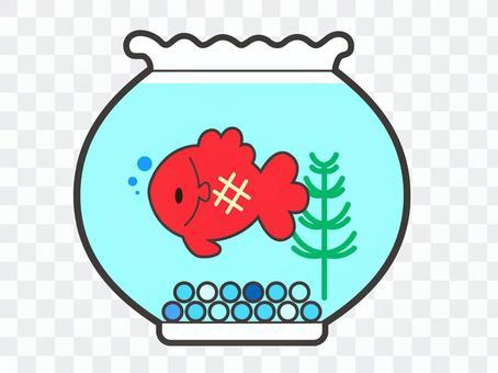 在一個魚缸裡的金魚