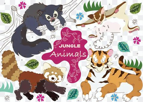 Animals in the jungle 2