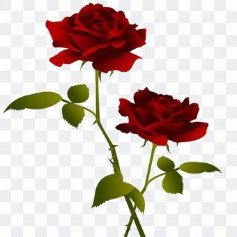 一朵紅玫瑰