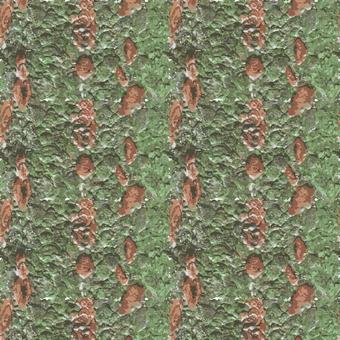 苔蘚的木材紋理