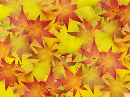 落葉秋葉和銀杏