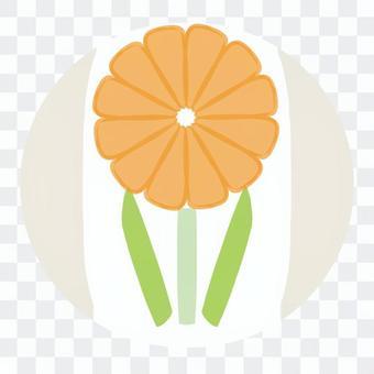 水果三明治,橘子花