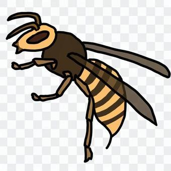 Horror wasp (color)