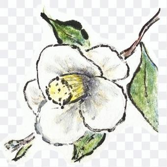 白茶花_圖片字母樣式