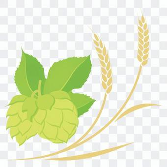 小麥和啤酒花