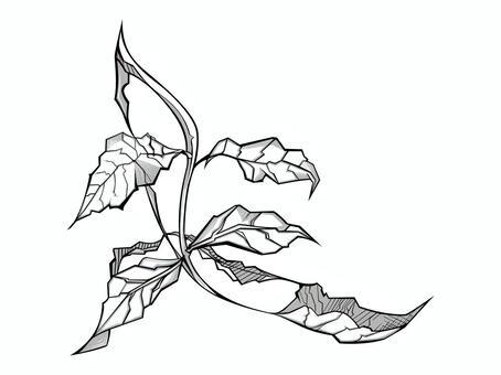 植物001(Kiha)