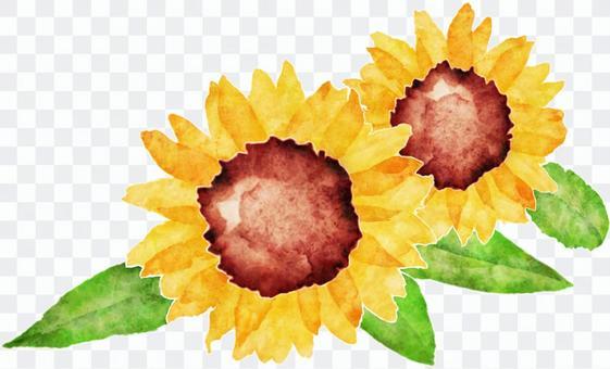 向日葵水彩畫 - 兩朵花