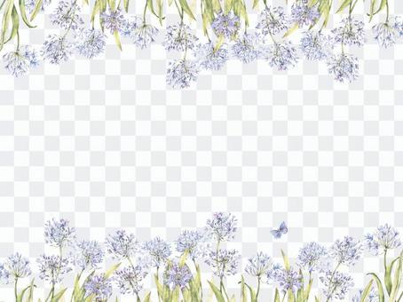 花框366  - 百子蓮的一個涼爽的花框架