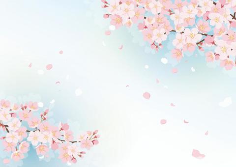 櫻花背景4