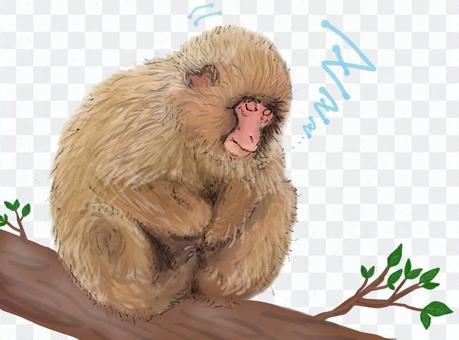 木の枝に座って眠る猿