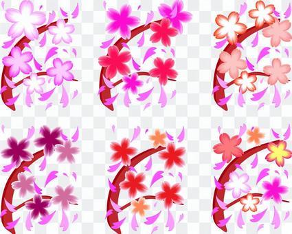 很多分支櫻花