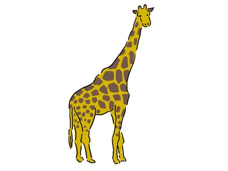 Zambe Giraffe