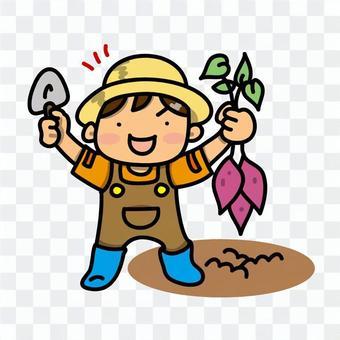 男孩挖紅薯