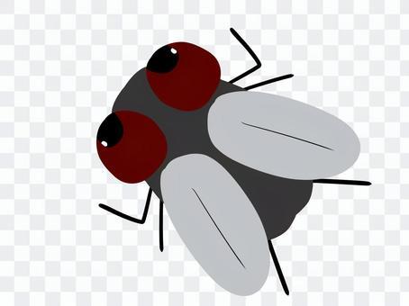 Fly deformed