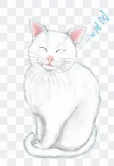 一隻白色的貓,閉著眼睛(睡覺的臉)的全身圖像