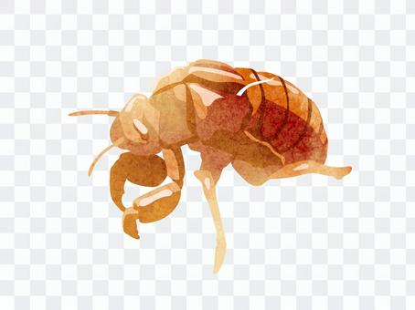 Animals_insects_shells_watercolor