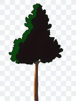 樹木(街路樹)