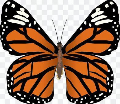 スジグロカバマダラ タテハチョウ科 昆虫