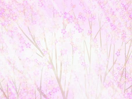 櫻桃背景21