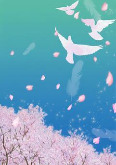 비둘기가 날고 푸른 하늘 벚꽃 4