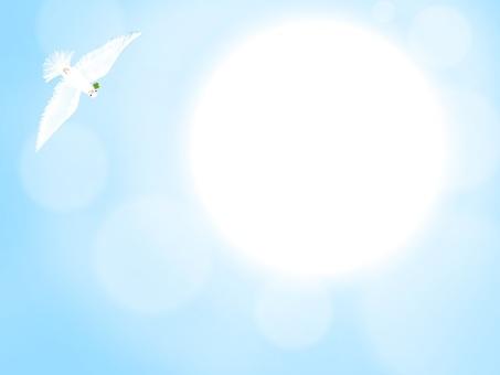 비둘기와 눈부신 태양