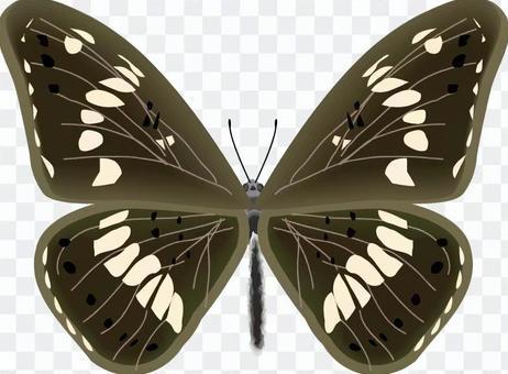 イチモンジ 蝶 蝶々 タテハチョウ科