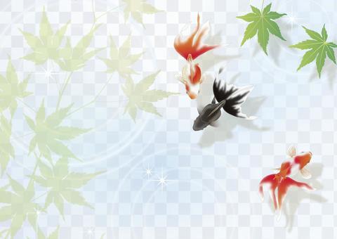 金魚和藍色的葉子__橫向大小