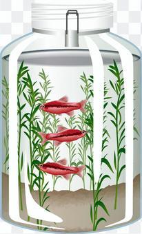 水族館櫻桃倒鉤水族館魚魚