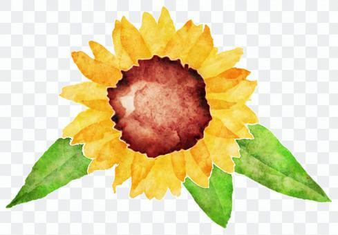 大型向日葵水彩畫·華麗