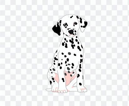 達爾馬提亞小狗