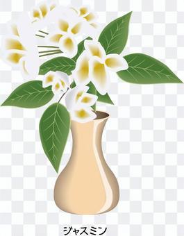茉莉花木犀科原料花瓶