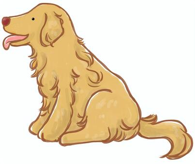 Dog _ Golden retriever
