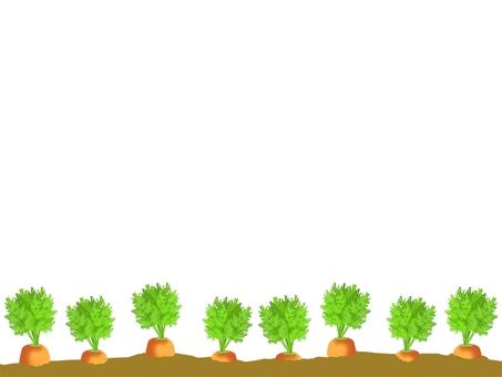 胡蘿蔔地框