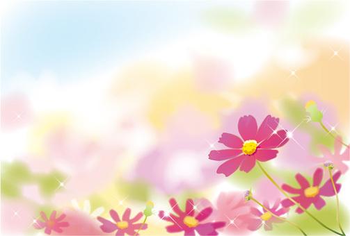 波斯菊花園