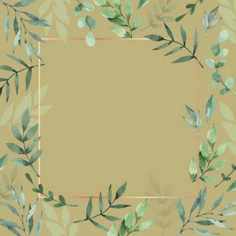 桉樹香草橄欖