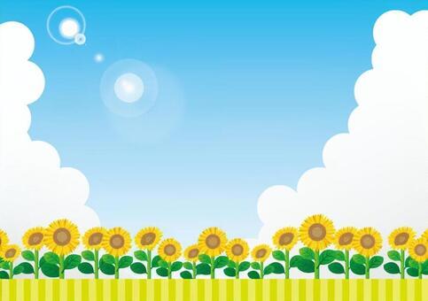 向日葵開花的銀行