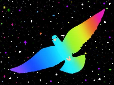 비둘기 시리즈!