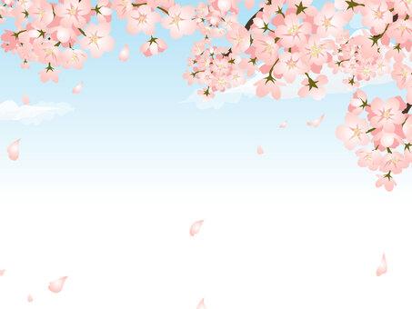 櫻花和藍藍的天空框架