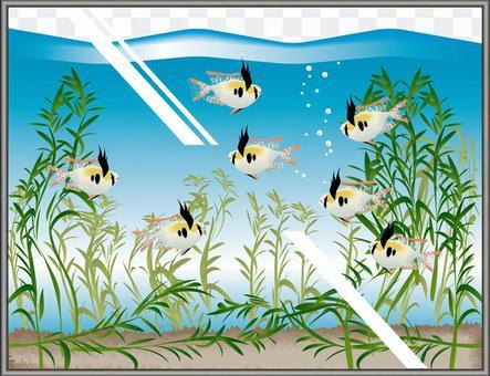 氣球養蜂水族館