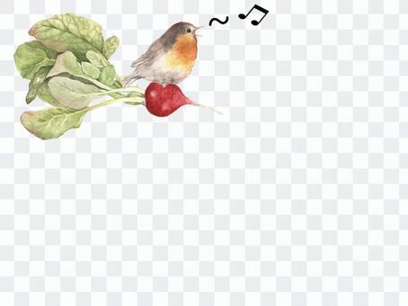 卡1秋蘿蔔和小鳥卡
